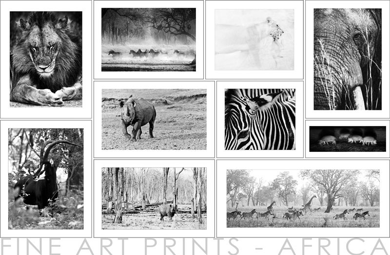 4 Fineartprints Africa