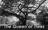 PhotoMail No 4 - 2015: Africas Queen of Trees
