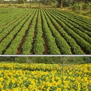 Displays - Agriculture