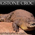 002-Croc-Park-Billboard-size5m