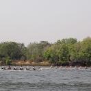 03_SZmR.0372-Oxford-&-Cape-Town-Men's-Eights-Race-500m