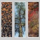 008_Interior-Decor-Translucent-Prints-on-Glass-Panel-No.3-size2.5m