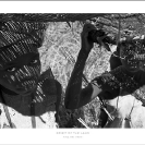 015_PZm-PWCL.7186BW-Fine-Art-Print-on-Canvas-size1.4m-PWC