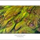 022_LZm-PWCE.0409-12.15-Panoram-PWCic-Fine-Art-Print-on-Canvas-size1.5m-PWC