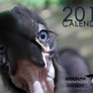 001_Page1-Cover-Ground-Hornbill-fledgling