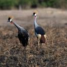 Group 12 - Birdlife