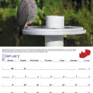 003_Page1+2-Jan-B12.8533--Lizard-Buzzard