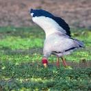 Group 13 - Birdlife