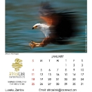 006_Artwork-Pg2-January-Fish-Eagle