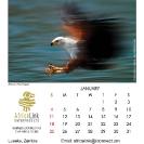 006_Artwork-Pg2-January-Fish-Eagle