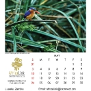 015_Artwork-Pg6-May-Malachite-Kingfisher