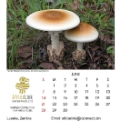 017_Artwork-Pg7-June-Tente-Mushrooms