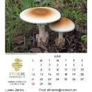 017_Artwork-Pg7-June-Tente-Mushrooms