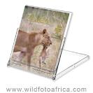Group 18 - The Zambia Calendar [CD Case]
