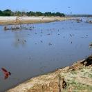 012_Artwork-Pg6-LZmE.328-Luangwa-River-&-Carmine-Bee-eater-Colony-sfw