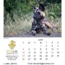 013_Artwork-Pg7-June-Wild-Dog