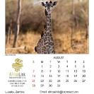 017_Artwork-Pg9-August-Infant-Giraffe