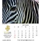 019_Artwork-Pg10-Sept-Zebra