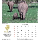 021_Artwork-Pg11-Oct-Elephants