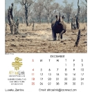 025_Artwork-Pg13-Dec-Black Rhino Charge
