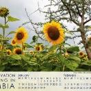 005-Pg2+3-Sunflowers