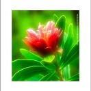 Africa - Flora
