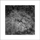 004_FTD.2566BW-Slash-&-Burn-Deforestation