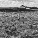 013_LZmMut.9661517BW-Mutinondo-Wilderness-sfw