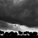 Africa - Landscapes B+W