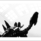 004_TUk-0075BW-Museum-Escape