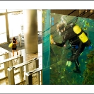 010_ArcUk-3011-Aquarium-Heron-Tower-London