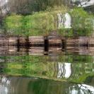 006_FT.0059 Waterberry Trees Zambezi River