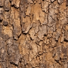 010_FT.0965V Marula Tree Bark