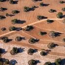 001_AgC.1629-Farmland-aerial-Zambia