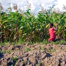 008_AgCF.0054-African-Conservation-Farming---Maize-Crop-&-Child-Running-Zambia