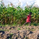 009_AgCF.0055-African-Conservation-Farming---Maize-Crop-&-Chils-Running-Zambia