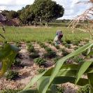 013_AgCF.0090-Woman-African-Conservation-Farmer-Crops-&-Village-Zambia