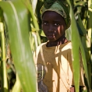 014_AgCF.0218V-African-Conservation-Farming---Girl-in-Maize-Field-Zambia