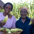 016_AgCF.0239-African-Conservation-Farming---Women-&-Maize-Zambia