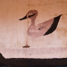 031_CZmA.8199-African-Painted-House-Duck-Detail