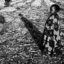 016_PZmLk.3169VBW-Onion-Field-Zambia-Zambia