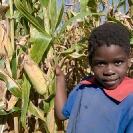 026_AgCF.0533-Cons-Farmer's-Child-&-Maize-Zambia