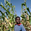 027_AgCF.0543V-Cons-Farmer's-Child-&-Maize-Zambia