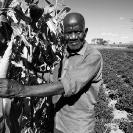 006_AgCF.0026BW-Conservation-Farmer-&-Crops-Zambia