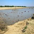 005_LZmE.0606A-Luangwa-River-&-Carmine-Bee-eater-Colony-E-Zambia