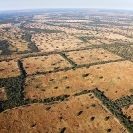 007_FTD.1617-Deforestation-for-Commercial-Farming-Zambia-aerial