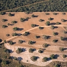 022_FTD.1631-Deforestation-for-Commercial-Farming-Zambia-aerial