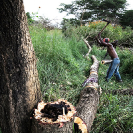 028_FTD.9810-Tree-Cutting-for-Charcoal-Zambia