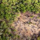 031_FTD.2568[rev2]_Slash-&-Burn-Deforestation-for-Trad-Farming