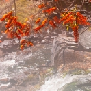 006_LZmL.7957V-Erythrina-flowers-&-Waterfall